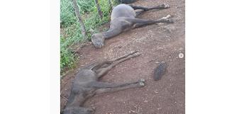 Raio mata animais na zonal rural de Cuité