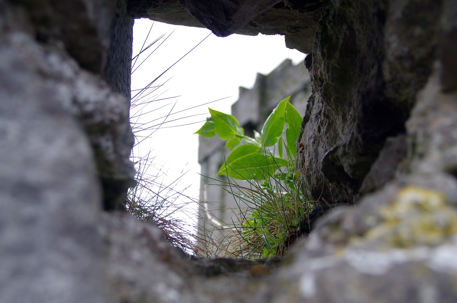 View of Dunguaire Castle through walls