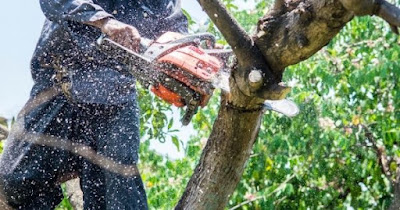 Everything You Need To Start a Tree Care Service