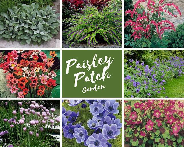 Paisley Rock Garden plants identification.