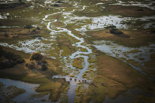 Elephants wade through water that floods the Okavango Delta annually after flowing down from the Angolan Highlands. Shot on assignment for a National Geographic magazine story about the National Geographic Okavango Wilderness Project