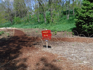 "a sign that says ""sunflower garden path"" sits next to garden fence and planted dirt"