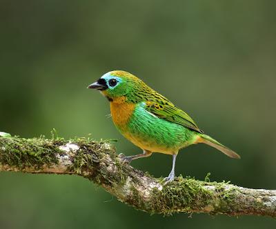 Observação de aves em Eldorado-SP