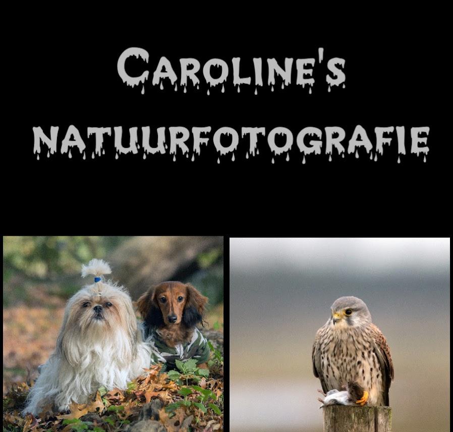 Caroline's natuurfotografie