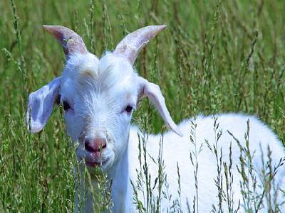 Pet Animals Name Goat
