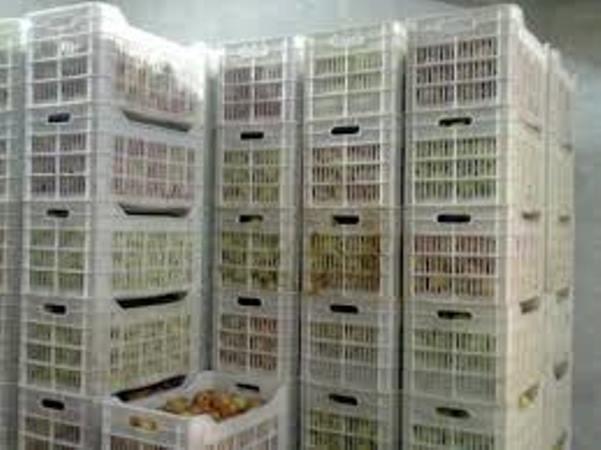 وحدة لتبريد وتخزين الفواكه والخضار في بلدة المشنف بالسويداء؟