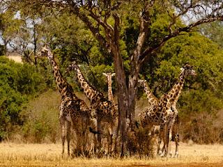 turismo ecologico en kenia y biodiversidad