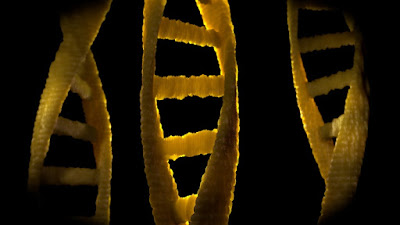 DNA is a gold mine of information refuting evolution and supporting creation