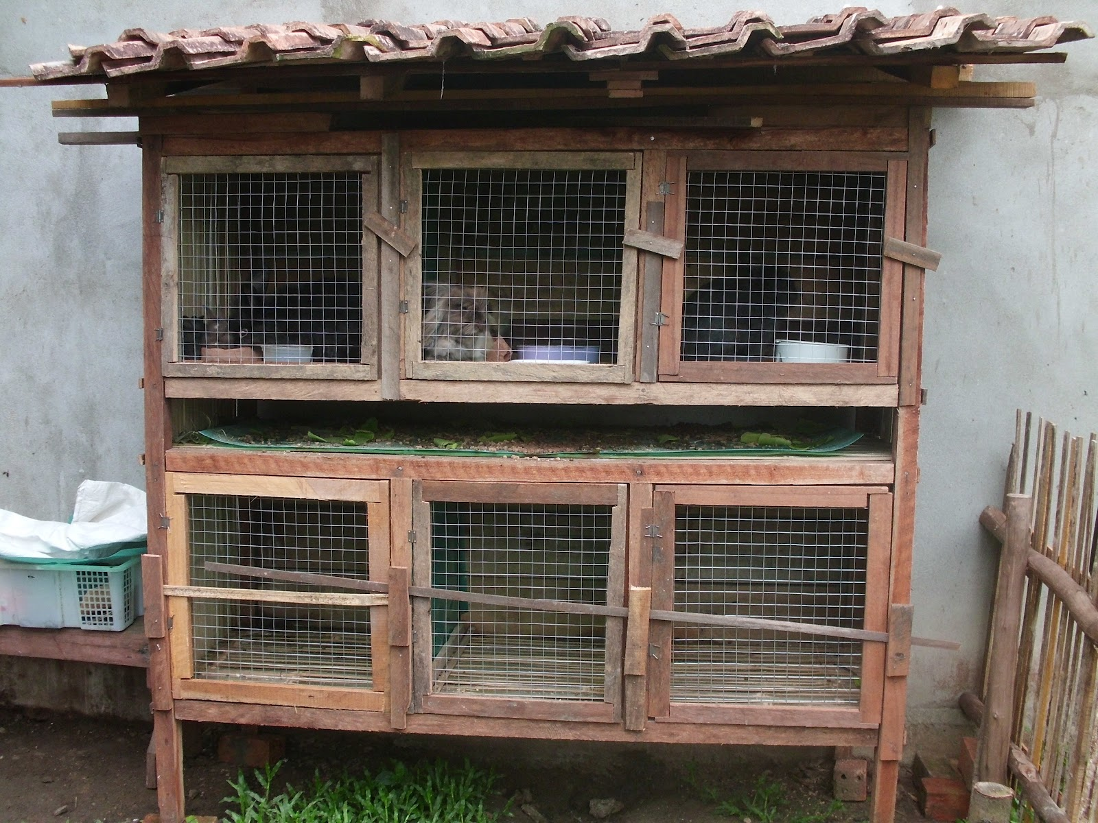 Peternak Kelinci Palembang: Kandang Kelinci Outdor Sederhana