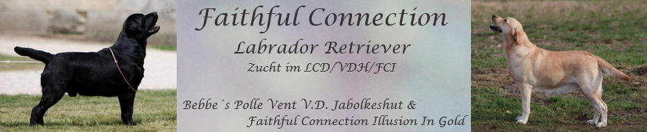 Faithful Connection R-Wurf
