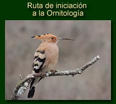 http://iberian-nature.blogspot.com.es/p/ruta-tematica-iniciacion-la-ornitologia.html