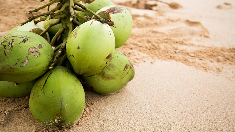 10 Core Benefits of Drinking Coconut Water