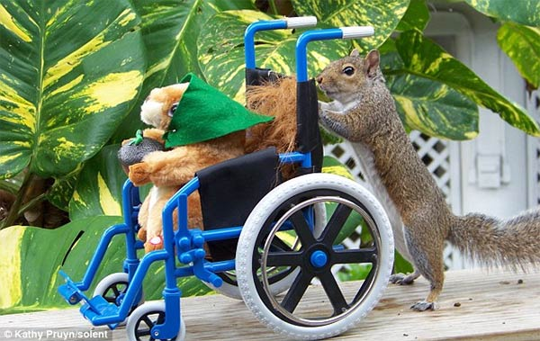 Funny Squirrel Interesting Facts Amp Pictures Funny And