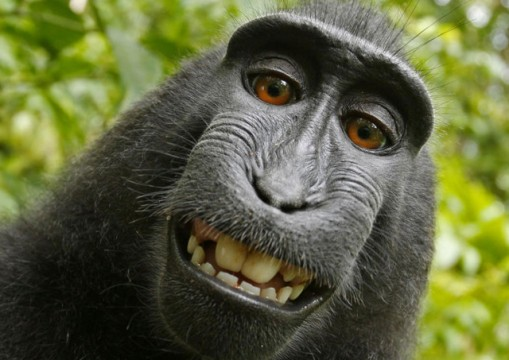 The monkey, Naruto, historic selfie made it famous was named 'Person of the Year' on Wednesday, 06 December 2017, by the animal rights group.
