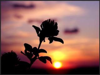 umut, umut ile ümidin farkı, hayata umutla bak, umudunu asla kaybetme, kişisel gelişim, kişisel, güven duygusu, Onu ayakta tutan güzel umut da yok olmuştu, edebiyat umut etmek nedir,