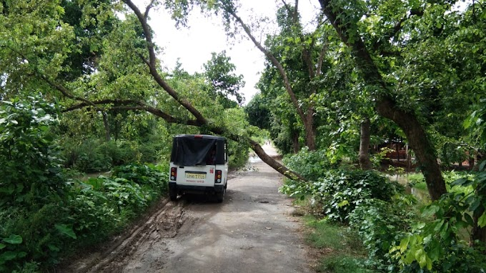 सड़क पर गिरा पेड़, आवागमन अवरुद्ध