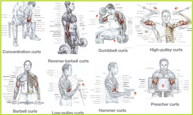 Do High Rep Exercises Build Muscle