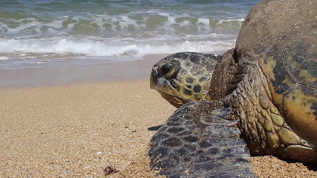 A turtle on the beach.