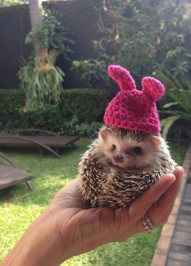 Funny animals of the week - 13 October 2017, best cute animal images, adorable animal