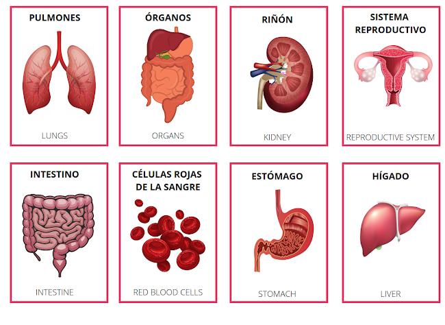 body in Spanish