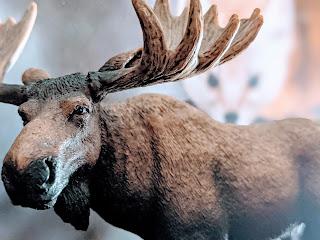 Moose And Newfoundland Pine Marten