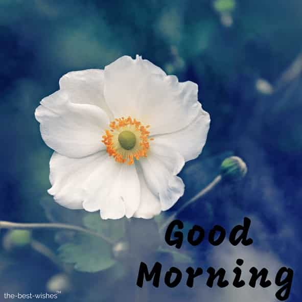 lovely good morning with white flower