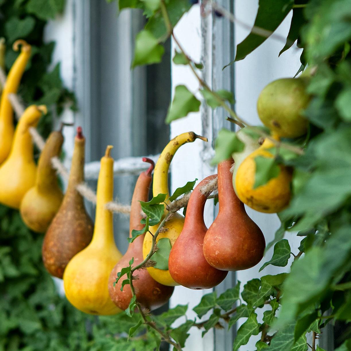 Decorar Gourds Con Colores