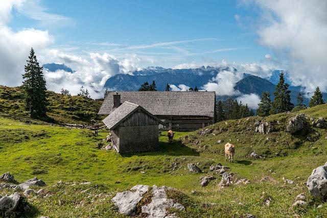 Gamsknogel und Kohleralm  Bergtour Inzell  Wanderung Chiemgauer Alpen 07