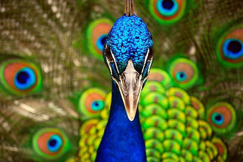 Amazing World & Fun: Beautiful Colorful Birds - Nature - photo#20