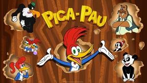 Pica-Pau Ao Vivo 24 Horas