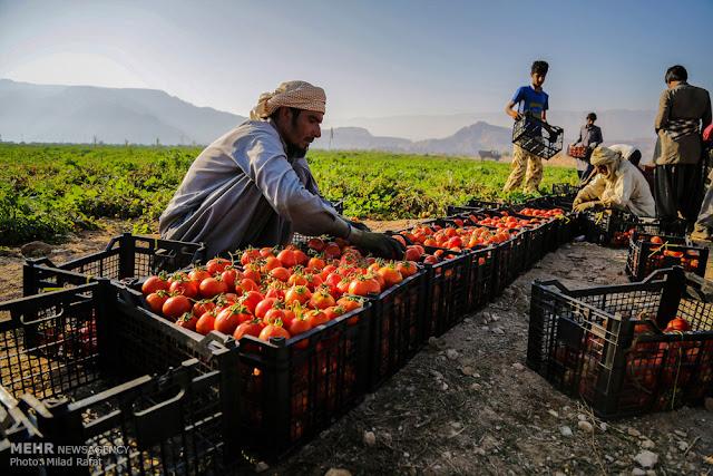 فرص عمل في تركيا - 08/07/2017