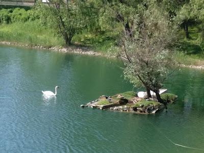 Un paseo por los lagos: la isla del reposo