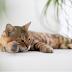 Πόσο ευαίσθητες  είναι οι γάτες στη θερμότητα;...