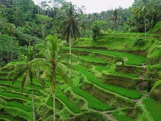 gezilecek en güzel ülkeler endonezya