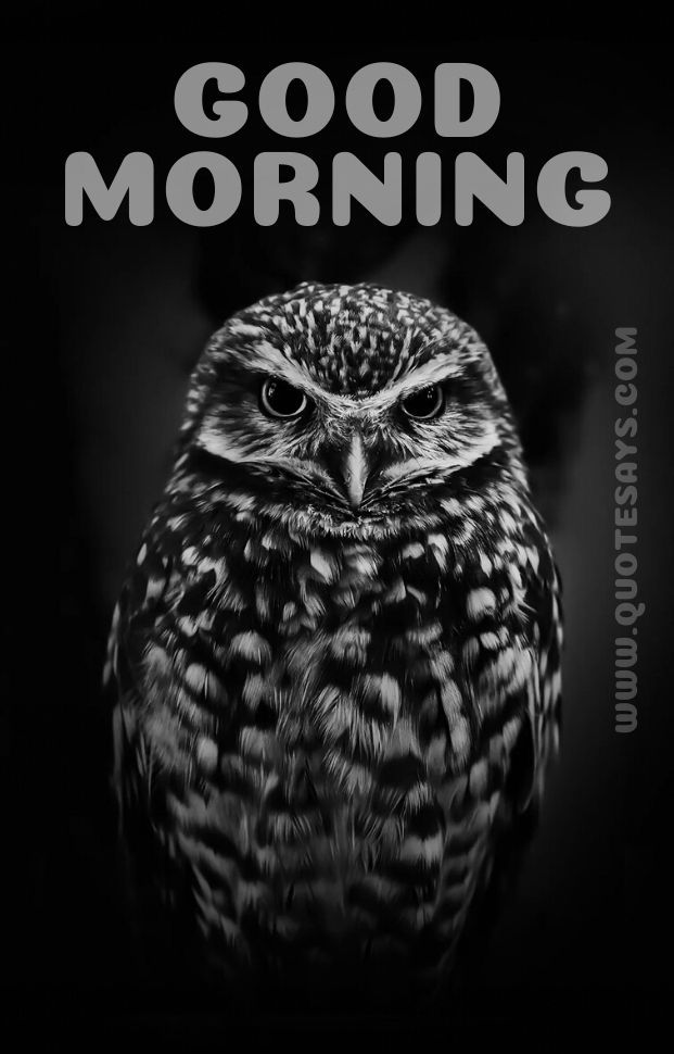 Beautiful Good Morning of Owl