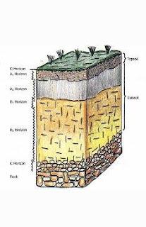 Faktor Pembentukan Tanah