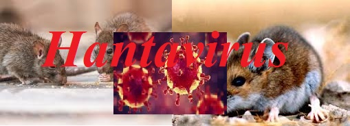 What is Hantavirus and How  it spreads