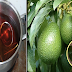 Avocado Leaves: Kanser Prevention and Medication And More Health Benefits