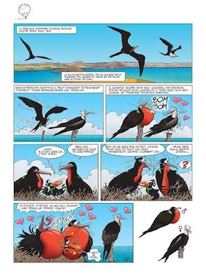 Les oiseaux en BD: la frégate gorge rouge
