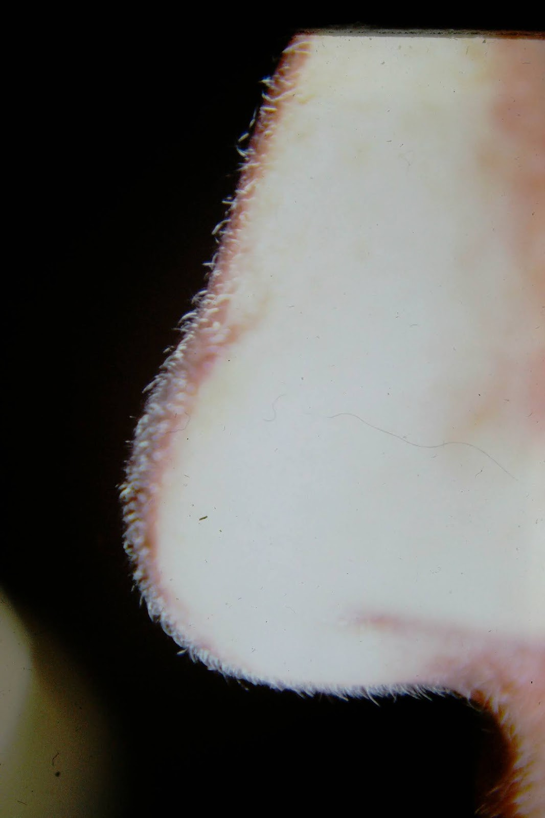 Nose - Date Unknown