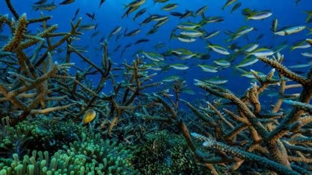 वैज्ञानिकों ने इस महीने समुद्र में गहरे स्थित 'ब्लू होल' का अध्ययन शुरू कर दिया है