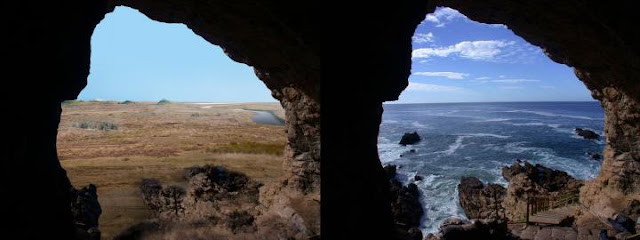 A lost world and extinct ecosystem on the southern shores of South Africa