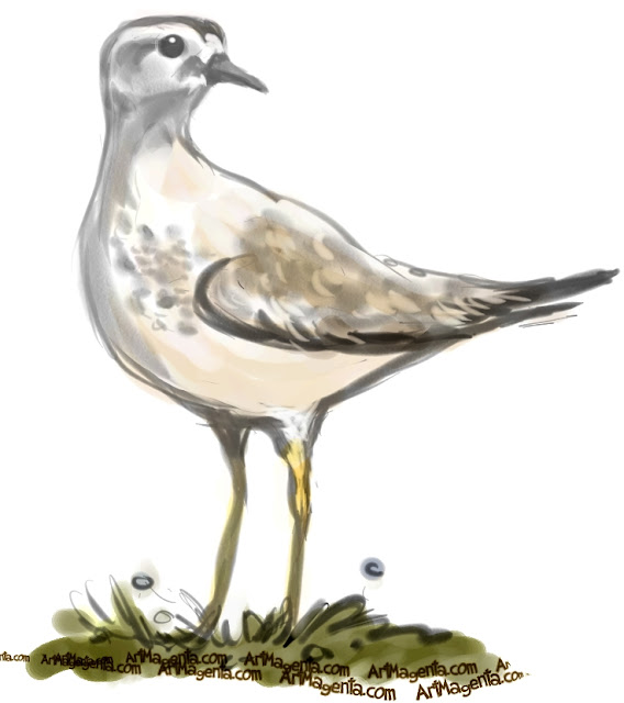 Mountain Plover sketch painting. Bird art drawing by illustrator Artmagenta
