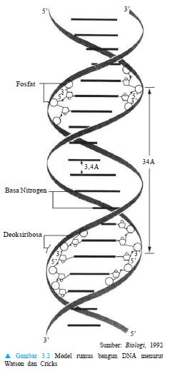 354 Pedia: Pengertian dan Fungsi Gen pada Makhluk Hidup