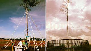 Duaaaaarrrr! Pohon Langka yang Ditanam Jokowi Mati Disambar Petir