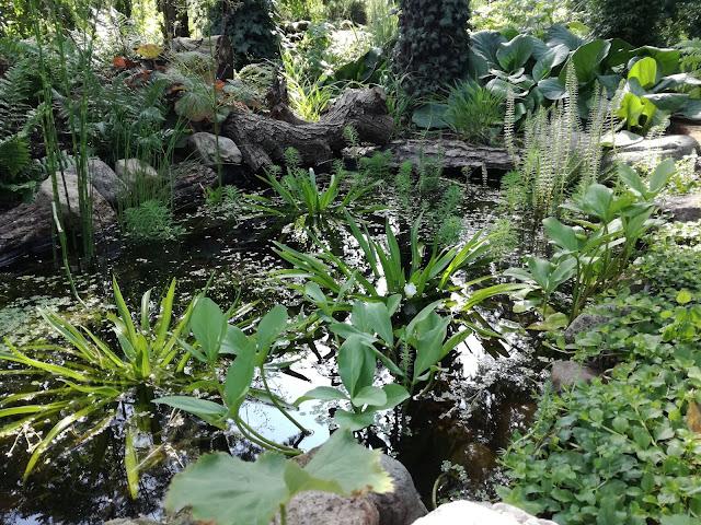 leśna sadzawka w ogrodzie, rośliny do oczka wodnego