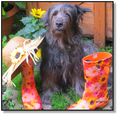Hund mit Gummistiefel und Strohhut
