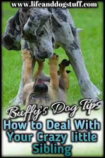 How to Deal With Your Crazy Little Sibling - Buffy's Dog Tips