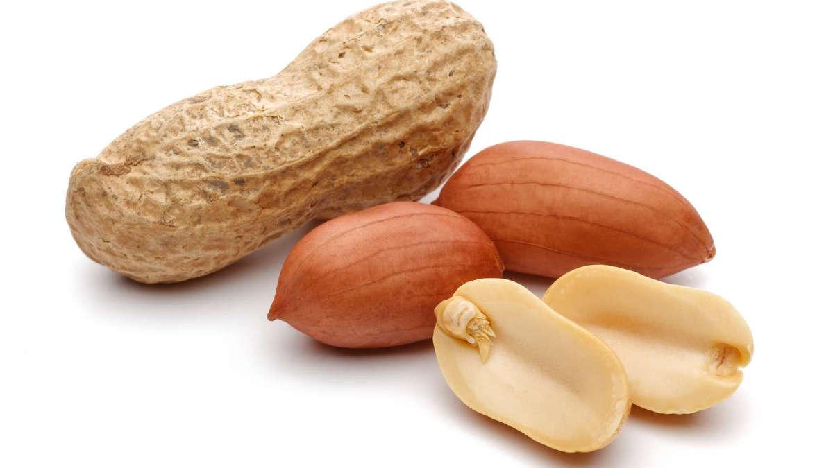 L'arachide, un trésor agricole Sénégalais : Arachide, économie, commerce, production, cuisine, pâtisserie, Guerte, thiaf, grille, sel, sec, plat, LEUKSENEGAL, Dakar, Sénégal, Afrique