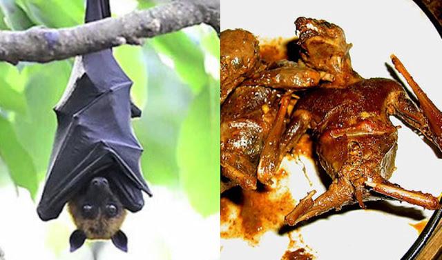 Hukum Mengonsumsi Daging Kelelawar